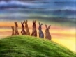 Watership Down - Full Movie