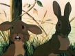 Watership Down - Bright Eyes